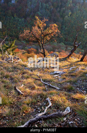 Sulinght Tree over mountain grass with black background - Stock Photo