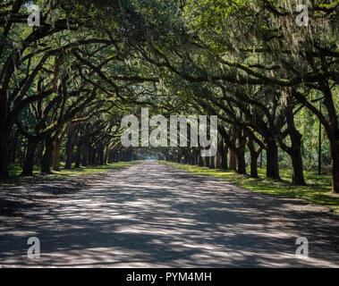 The Drive at Wormsloe plantation estate on Hope Island Savannah Georgia USA  which is overhung by live oak branches festooned with Spanish Moss - Stock Photo