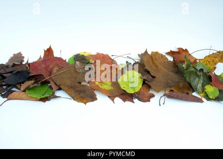 A Line of Autumn leaves on White Background - Stock Photo