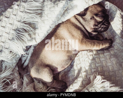 Cute, sweet puppy sitting on a white blanket - Stock Photo