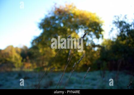 Wild Grass Seeds in Foreground - Stock Photo