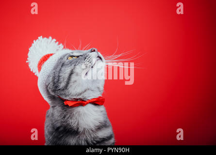 Grey tabby cat wears Santa's hat isolated on red background and looks up. Christmas and New year concept Stock Photo