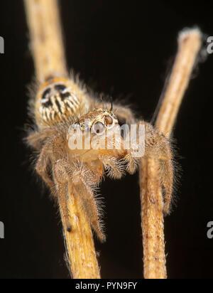 Beautiful photo of Salticidae spider - Stock Photo