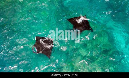 Aerial view of two Manta rays swimming in Nusa Penida near Bali . - Stock Photo