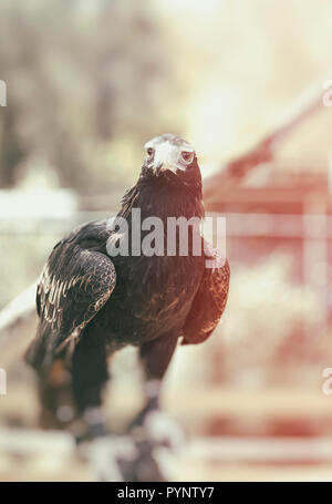 eagle II, brisbane-australia - Stock Photo