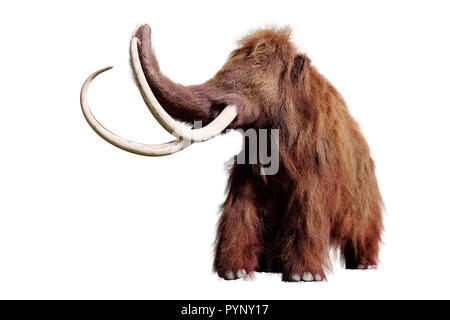 woolly mammoth, extinct prehistoric animal isolated on white background (3d illustration) - Stock Photo