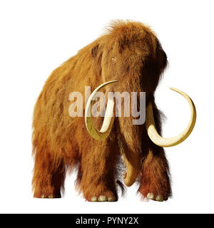 woolly mammoth, extinct prehistoric elephant species isolated on white background (3d illustration) - Stock Photo