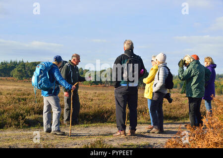 Official Guide on the New Forest National Park walking -festival explaining the heathland on Whitefield Moor to walkers on walking tour - Stock Photo