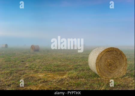 Rolled hay bales on a fog shrouded hay field in Mareeba, Queensland ready for transport to drought ravaged areas. - Stock Photo
