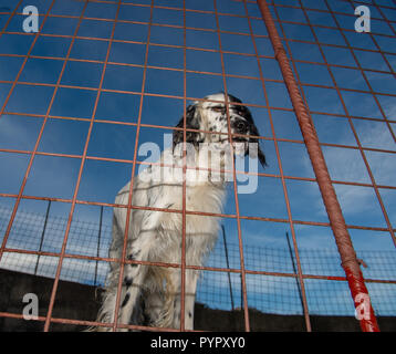 Hunting dog in a cage - Stock Photo