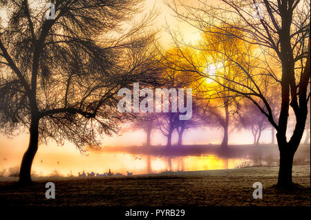 The rising sun silhouettes the trees and flock of geese along the shores of a lake. - Stock Photo