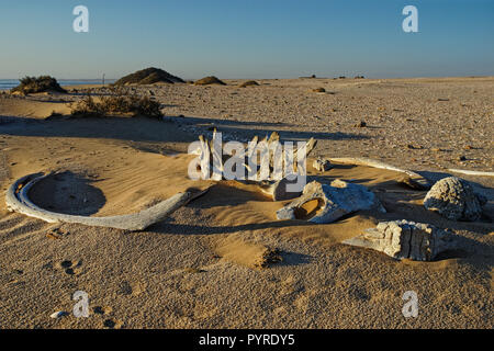 Whale bones, bleached in the sun lying on the sand at Meob Bay whaling station, Skeleton coast, Namibia, Africa - Stock Photo