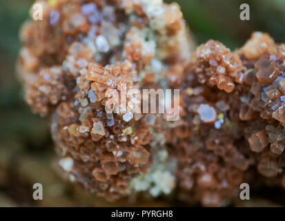Aragonite star cluster from Morocco on fibrous tree bark in the forest preserve. - Stock Photo