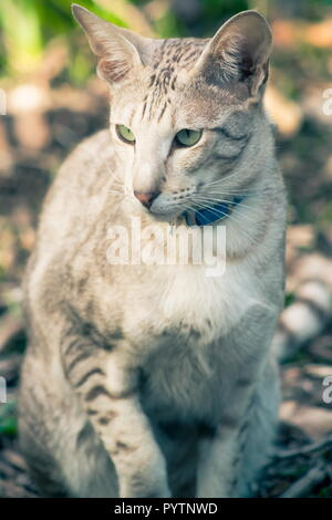 Close up portrait image of a domestic cat full frame - Stock Photo
