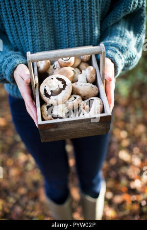 Close Up Of Woman Holding Wooden Baket Of Freshly Picked Wild Mushrooms - Stock Photo