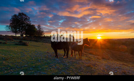Godshill, New Forest, Hampshire, UK, 30th October 2018, Weather: Clearing skies are set to allow temperatures to fall to zero degrees overnight. Two ponies look out over a valley as a glorious fiery orange sunset takes place against a cloud speckled blue sky behind them. Credit: Paul Biggins/Alamy Live News - Stock Photo