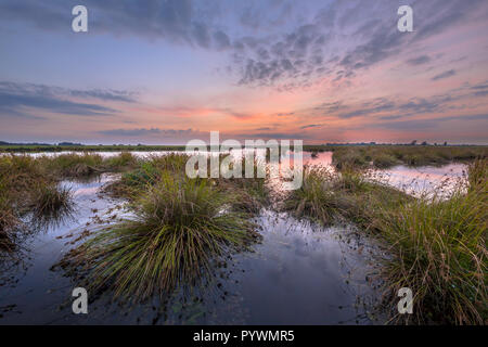 Landscape image of Wetland with Large clumps of Soft rush (Juncus effusus) growing in reflecting water of Peizermaden water management area under past - Stock Photo