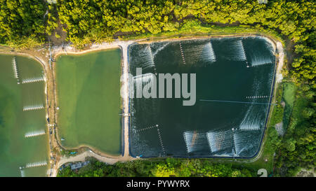 Shrimp farms aerial top view in the Phang Nga bay area, Thailand - Stock Photo