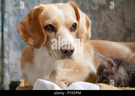 Unexpected friends - Stock Photo