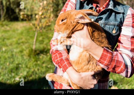 partial view of woman holding adorable brown rabbit outdoors - Stock Photo