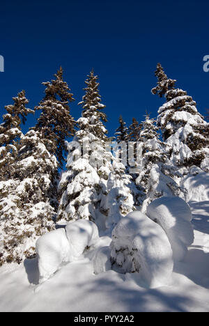Fir trees covered with snow in Orobie Alps, Lombardy, Italy - Stock Photo