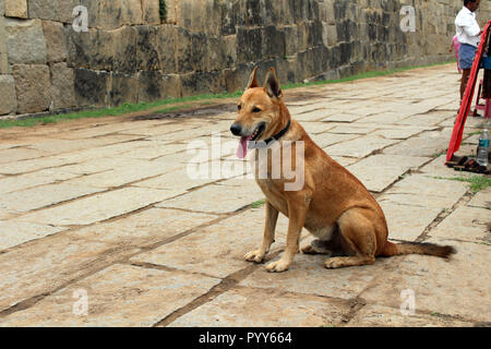 A dog is relaxing around the sellers in Hampi - Stock Photo