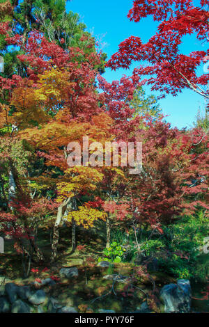 Red and yellow leaves along Eikando Temple in autumn - Stock Photo