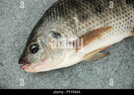 Fresh raw fish - Stock Photo