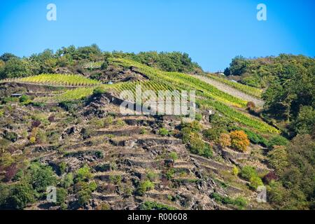 VINEYARDS AND ROCKY TERRACES ABOVE THE RIVER RHINE NEAR LORELEY GERMANY - Stock Photo
