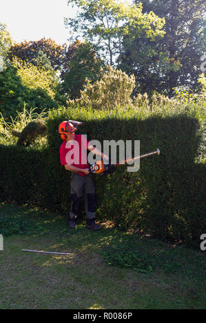 Man cutting a hedge and partly making animal shapes. - Stock Photo