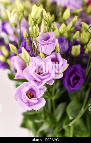 Texas bluebells (Eustoma grandiflorum), also kwown as Texas bluebell, bluebell, showy prairie gentian, prairie gentian and Lisianthus *** Local Captio - Stock Photo