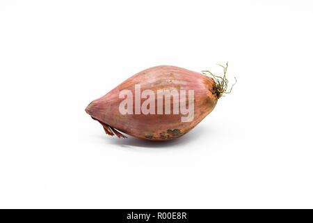 Shallot onion isolated on white background - Stock Photo