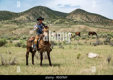 Cowboy wrangler ranch hand and lariat rope on horse watching over horse herd as they graze on prairie - Stock Photo