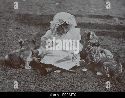 Digital improved reproduction, Little girl plays with three lion cubs, original print from the year 1899 - Stock Photo