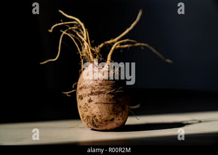 White radish background with roots on the table in light and shade - Stock Photo