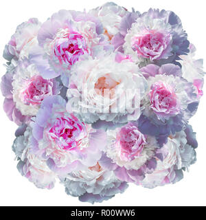 Blooming pale pink peony isolated on white - Stock Photo