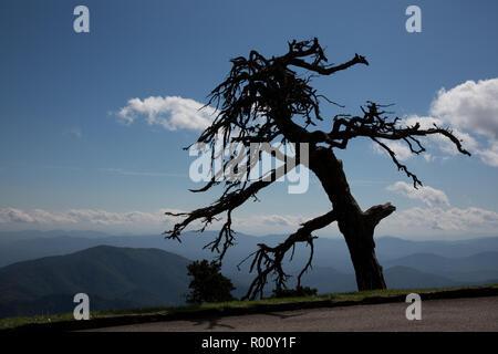 Spooky tree  overlooking the Blue Ridge Mountains. - Stock Photo