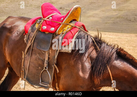 Closeup of saddled horse with traditional saddle in Mongolia on steppe - Stock Photo