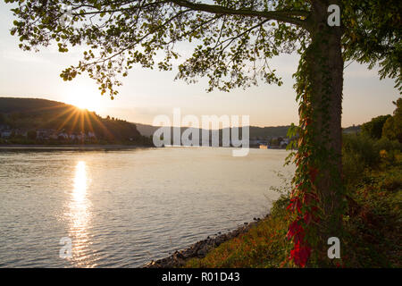 The village of Boppard, Germany, on the river Rhine in the early morning - Stock Photo