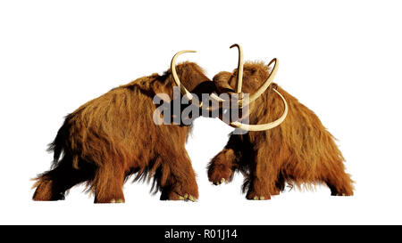 woolly mammoth bulls fighting, prehistoric ice age mammals isolated on white background - Stock Photo