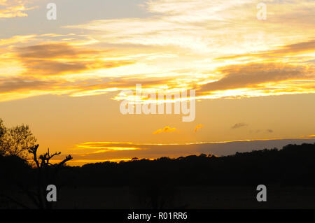 London, UK, 31 October 2018 Sunset in Richmond Park on the last day of October. Credit: JOHNNY ARMSTEAD/Alamy Live News - Stock Photo