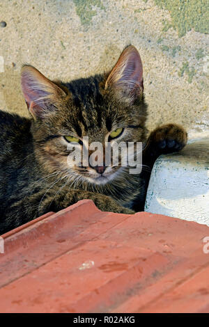 Portrait of dark grey tabby kitten sitting on ceramic tiles with its paw kept on a sill - Stock Photo