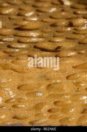 porous sponge surface background, extreme macro of big porous dry sponge bizarre look - Stock Photo