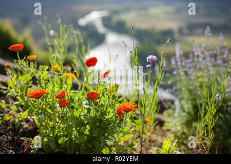 Flowers growing on a hillside with the Dordogne river in the background - Stock Photo