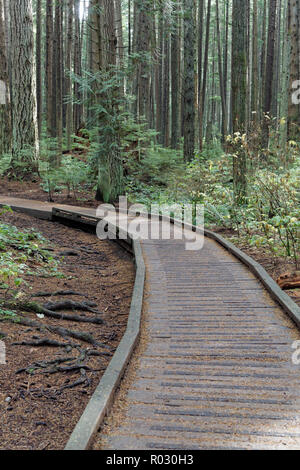 Boardwalk elevated walkway on a trail  in Pacific Spirit Regional Park, Vancouver, BC, Canada - Stock Photo