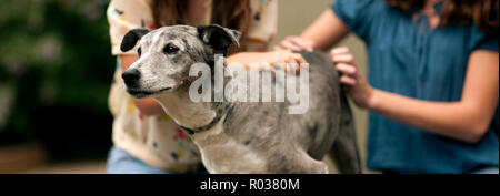 Two girls sitting with a dog. - Stock Photo