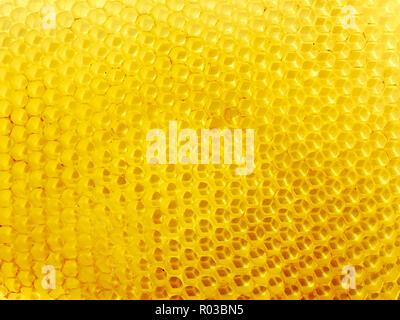 Honeycomb of fresh wax with empty cells - Stock Photo