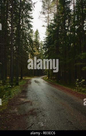 Asphalt road going through dark conifer forest - Stock Photo
