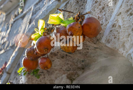 Dried decorative pomegranates on a stone wall background - Stock Photo