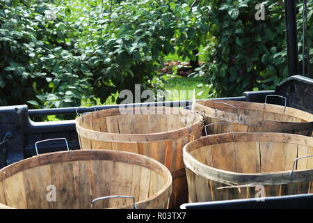 Four apple baskets on a cart in the orchard - Stock Photo